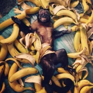 monkeys-banana-1
